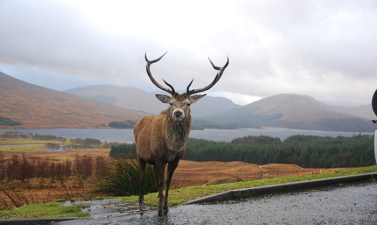 Scotland the Brave?